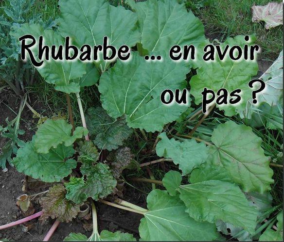rhubarbe-jardin-incontournable
